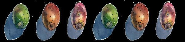 cornicetta-fichi-dindia