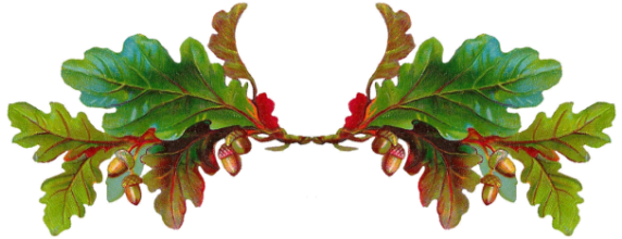 cornicetta-ghiande