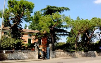 Alberi, Golosine, Verona.pg