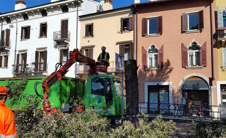 Taglio-lecci-San-Giorgio-01