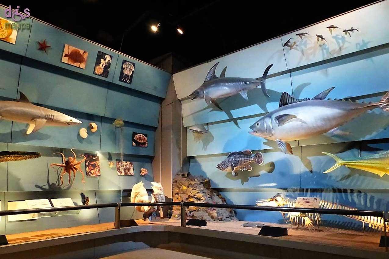 Museo civico di scienze naturali, Verona