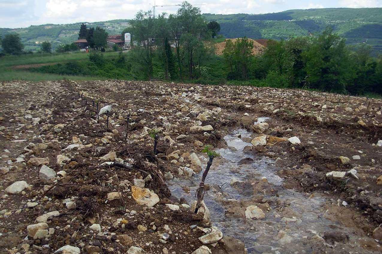 Erosione in un nuovo vigneto, Valpantena, Verona