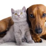 Conosci il tuo cane e il tuo gatto? Le letture per entrare nel loro mondo