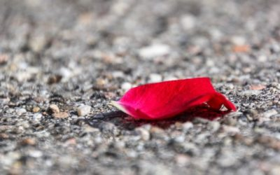 alla fine dell'asfalto