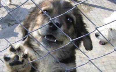 siti incontri verona animal shelter
