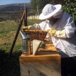 Incontro con Paolo Fontana autore del libro Il piacere delle api