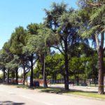 Centinaia gli alberi da abbattere per realizzare il nuovo filobus