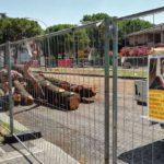 Filobus, tagliare e ripiantare alberi è uno spot contro il dissenso