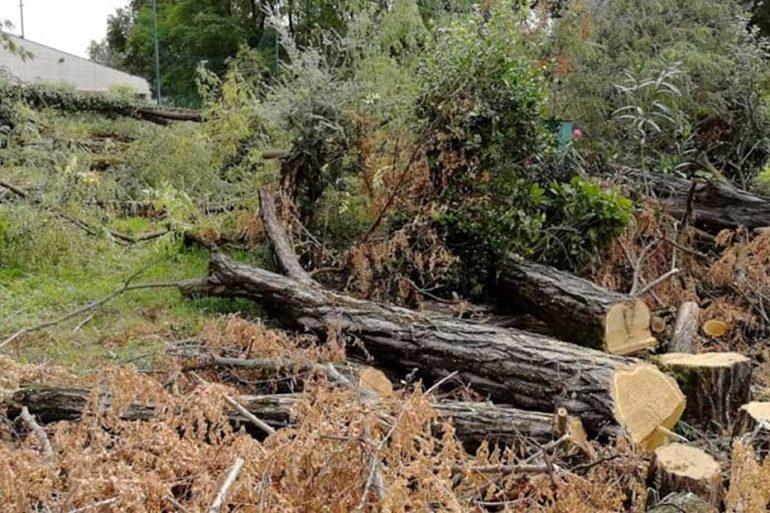 Taglio alberi via Umbria, Verona