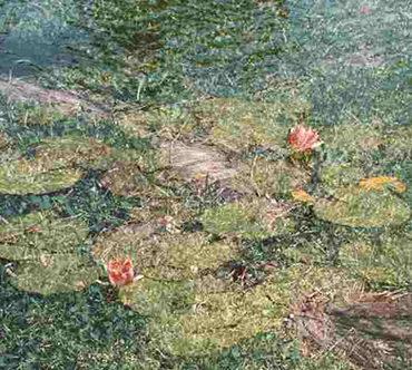 Et complexu natura di Alba Rigo