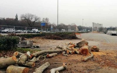 Alberi abbattuti in via Città di Nimes