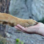 Cani, consigli dopo la passeggiata e nuova dieta se non si muovono