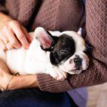 L'adozione di un cane non èsoltanto un atto d'amore
