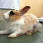 Animali disponibili a farsi adottare proposti da Animalisti Verona