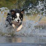 Vivere insieme al proprio cane l'opportunità di una crescita