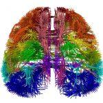 Come funziona il cervello? Sviluppato un modello matematico